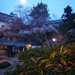 夜桜とおぼろ月夜