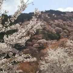 2022年桜シーズンのご予約についての画像
